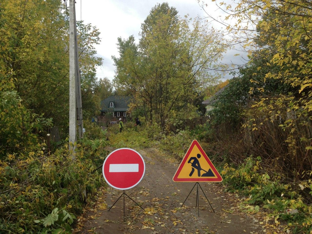 Проход запрещен: идет валка деревьев
